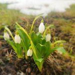 Våren äntligen på gång ut till Dalarö